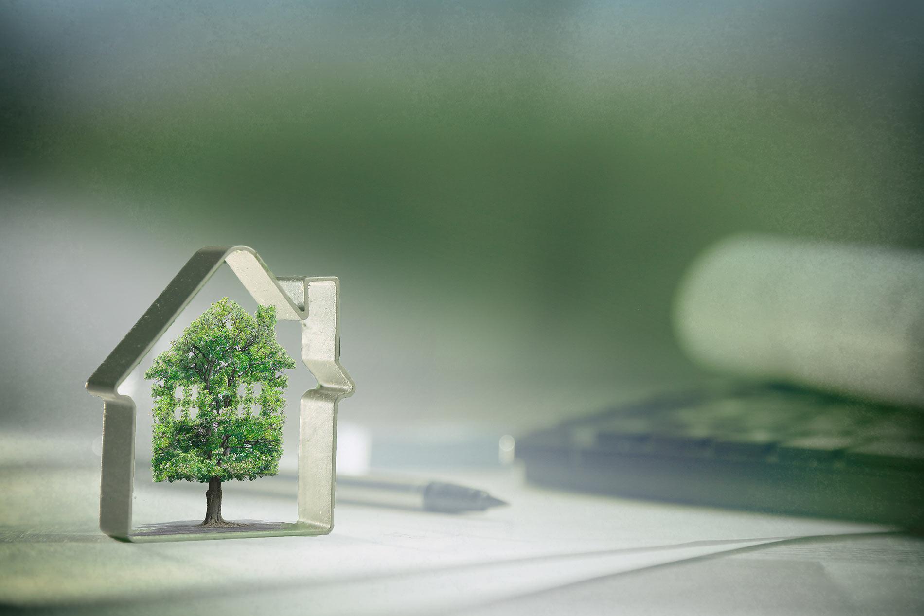 Kleiner Baum in Haus