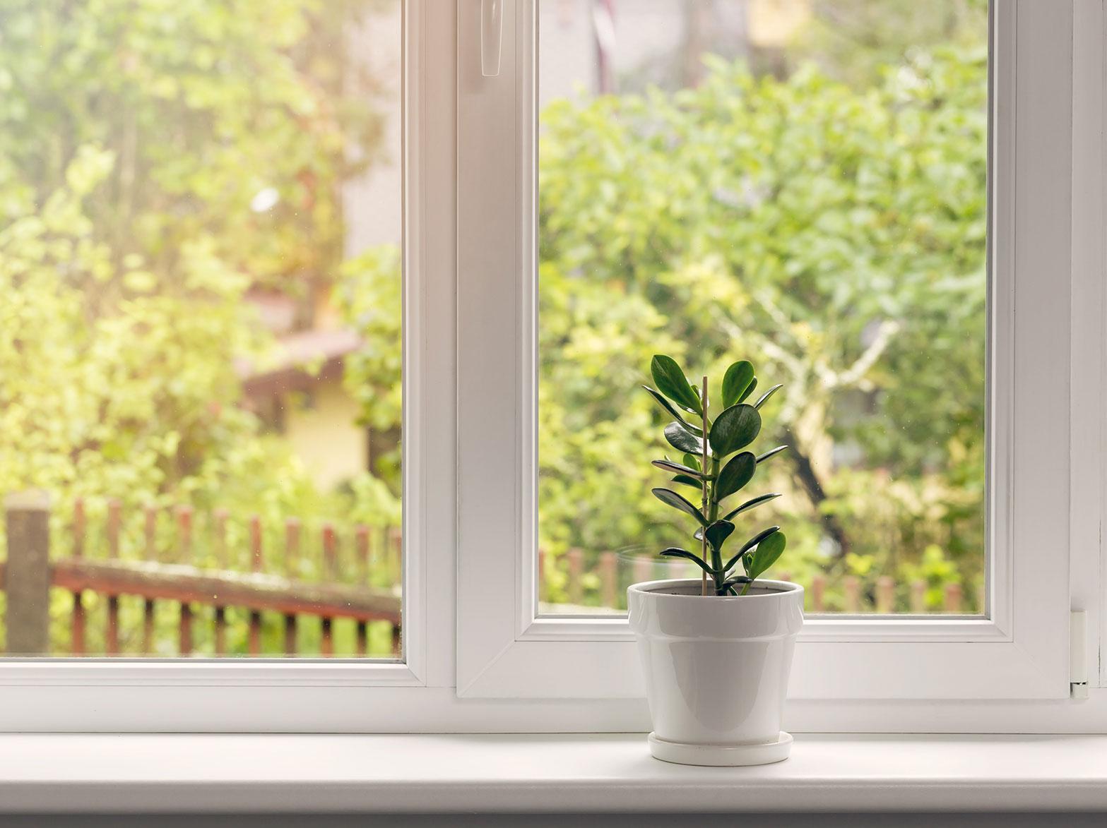 Zimmerpflanze auf einer Festerbank
